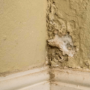 Top 9 places in your home that could be harboring mold