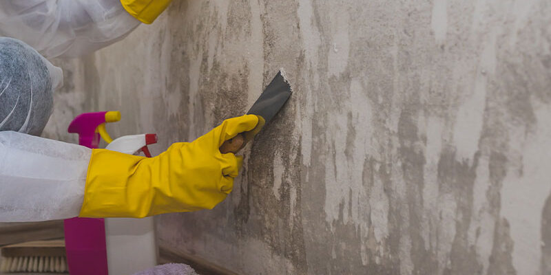 Don't let the mold grow. Here's why your house needs to be protected from it.